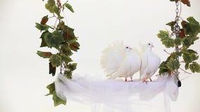 White Birds. Two white doves fun sitting on the swing stock video