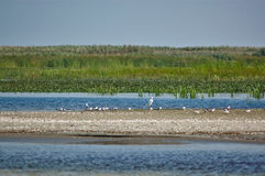 White birds on a wild sand beach in the Danube Delta. At the Black Sea Stock Images