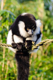 White and Black Animal on Braided Rope Tilt Shift Lens Photo Royalty Free Stock Photo