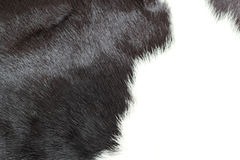 White and black background cow fur. Royalty Free Stock Photos