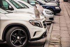 White and Black Bird Beside Car Headlight Royalty Free Stock Images