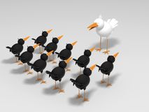 White and black birds. White bird in front of black birds Royalty Free Stock Image