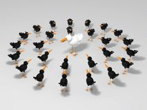 White and black birds. White bird surrounded by black birds Royalty Free Stock Images