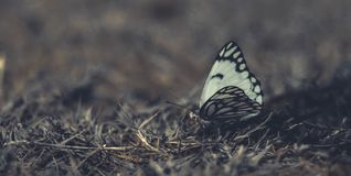 White and Black Butterfly on Grass in Close-up Photography Stock Photo
