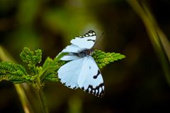 White And Black Butterfly Perching On Green Leafed Plant stock image