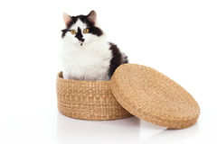 White and black cat Royalty Free Stock Photography