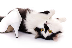 White and black cat Stock Images