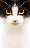 White black cat royalty free stock photos