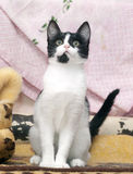 White with black cat Stock Photo