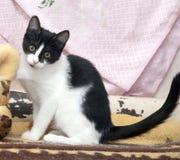 White with black cat Stock Photos