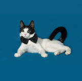 White and black cat lies on blue Royalty Free Stock Image