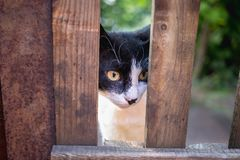A white and black cat photographed through a fence. Royalty Free Stock Image