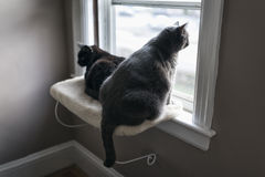 White and Black Cat Sitting on Window Ledge. Portrait of two 10-year old cats sitting on a window ledge Royalty Free Stock Photo