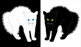 White and black cats Stock Image