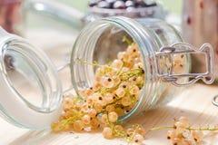 White black fruits currants jars preparations Stock Image