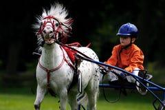 White Black Horse With Boy Royalty Free Stock Image