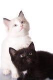 White and black kitten. Isolate on white Stock Photos
