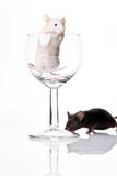 White and black mouse Royalty Free Stock Images