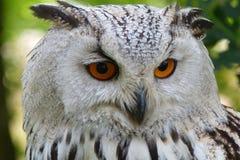 White and Black Owl Stock Photos