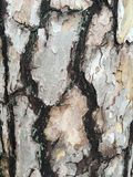 White and black patterned bark Royalty Free Stock Photography