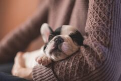 White and Black Puppy Royalty Free Stock Images