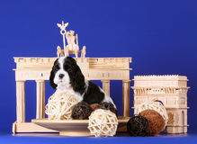 White and black puppy on a blue background. Dog and decoration. Thumbnail ancient structures. Stock Image