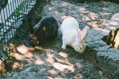 White and black rabbit in a cage Royalty Free Stock Photo