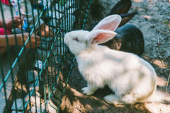 White and black rabbit in a cage Stock Images