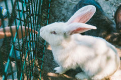 White and black rabbit in a cage Royalty Free Stock Photography