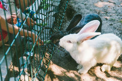 White and black rabbit in a cage Stock Photo