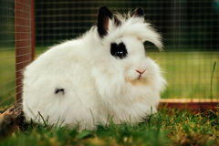 White and black rabbit Royalty Free Stock Image