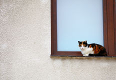White black red cat in window outdoor Royalty Free Stock Images