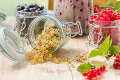 White black red currants gooseberries cherries jars preparations Royalty Free Stock Photography