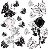 White and black rose with butterflies Royalty Free Stock Photo