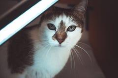 White and Black Short Fur Cat Stock Photos