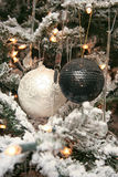 White and black sphere. On a christmas fur-tree Stock Image