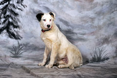 White with black spots puppy Royalty Free Stock Photography