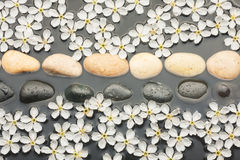 White and black  stones and  flowers  in the water Royalty Free Stock Image