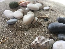 White and black stones sea urchin adn shells on the sand. Holiday vacation summer background marine world royalty free stock photography