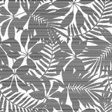 White and black striped tropical leaves seamless pattern Stock Image