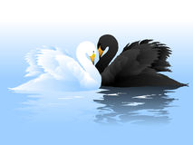 White and Black swans couple Royalty Free Stock Photography