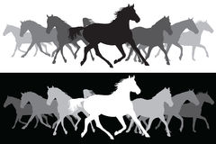 White and black Trotting horses silhouette background Stock Images