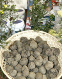 White and black truffles in Italy Stock Photography