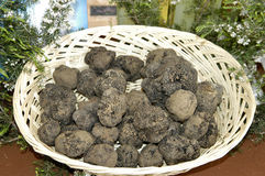 White and black truffles in Italy Stock Photo