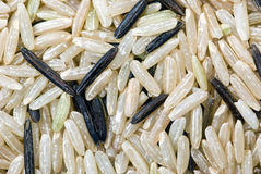 White and black uncultivated rice (macro) Stock Images