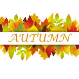 White blank on autumn background with maple leaves. White blank on autumn background with maple leaves vector. Nature season color orange autumn background Stock Images