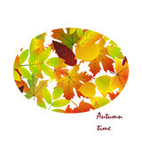 White blank on autumn background with maple leaves. White blank on autumn background with maple leaves vector. Nature season color orange autumn background Stock Photos