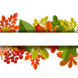 White blank on autumn background with maple leaves. White blank on autumn background with maple leaves vector. Nature season color orange autumn background Royalty Free Stock Photos