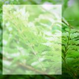 White blank space for text fern leaves background. White blank space for text on green background Stock Photos