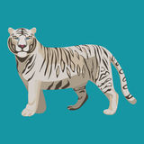 White or bleached tiger isolated on white. Predator rare animal. White or bleached tiger isolated. Predator rare animal with black stripes typical of Bengal Royalty Free Stock Images